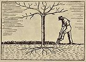 Manuring Fruit Tree