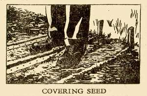Covering Seed