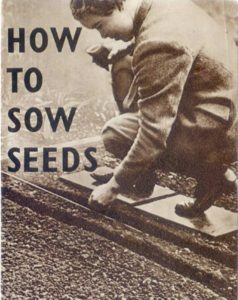 How to Sow Seeds Guide