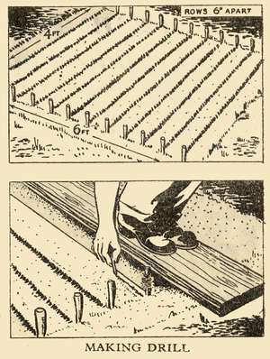 Making Seed Drill