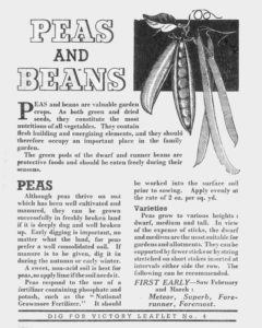 Peas Beans Growing Guide