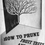 How to Prune Fruit Trees & Bushes DfV 25