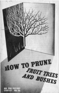 How to Prune Fruit Trees and Bushes Guide