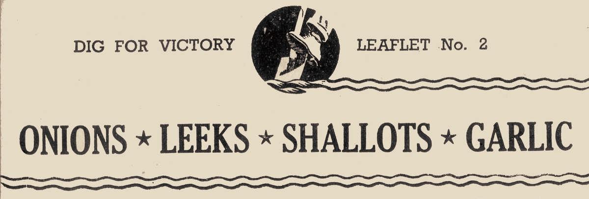 onions shallots garlic leeks guide