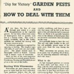 Garden Pests & How to Deal With Them DfV 16