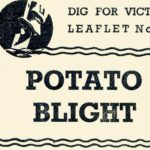 Potato Blight DfV 17