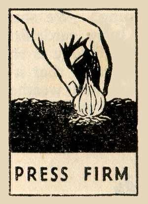 Press Shallots Firm