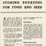Storing Potatoes for Food & Seed DfV 13
