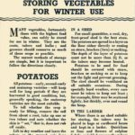 Storing Vegetables for Winter Use DfV 3
