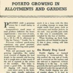 Potato Growing in Allotments & Gardens DfV 15