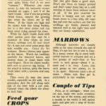 Pests, Feeding, Lettuce, Marrows, Tips