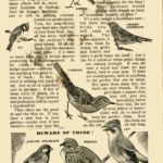 Birds – Allies and Foes