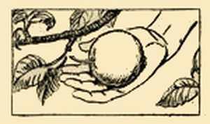 Harvesting Apple
