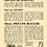 Greens, Seedlings, Celery & Potato Haulms