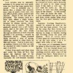 Fruit - Harvesting & Cultivation
