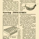 Storing Tomatoes, Marrows & Pumpkins