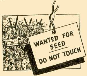 Wanted for Seed Saving