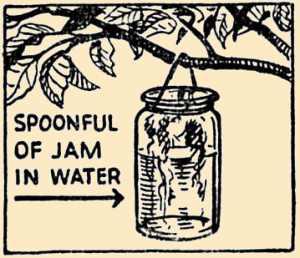 Wasp Trapping Jar